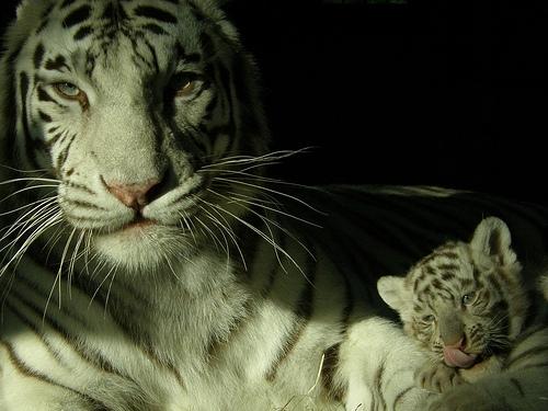 10 лучших зоопарков мира