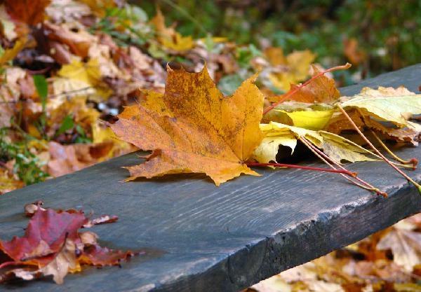 За что я люблю осень!