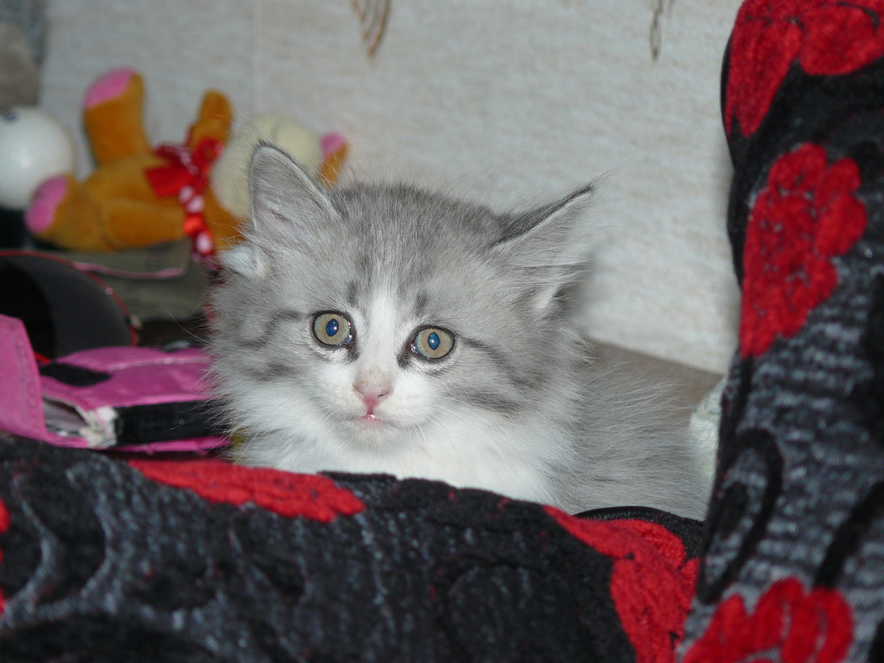 Чей котэ? Мой котэ!