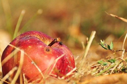 Осень. Октябрь. Pink Floyd