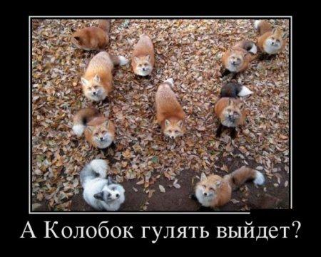 http://horde.kz/uploads/images/50/84eb/5084ebb41370b.jpg