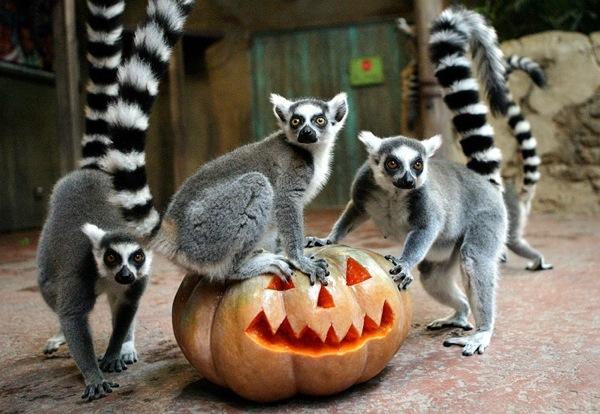 Halloween на Орде